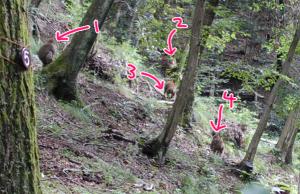 厚木七沢森林公園